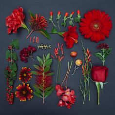 Lovely Red flowers organized neatly by emily blincoe