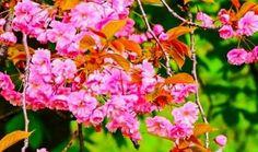 Lietuvos gėlių