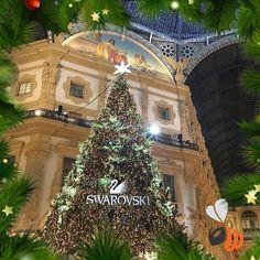 Christmas is in the air!  #galleriavittorioemanuele #christmastree #christmasiscoming #natalestaarrivando #xmas #xmastree #placetobe #natale #natale2016 #follow #picoftheday #bestmoments #bestoftheday #photooftheday #milan #milano #womboit
