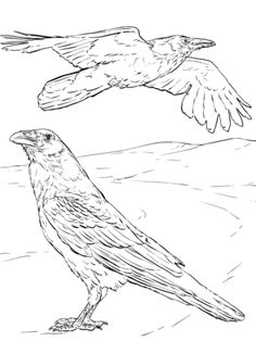 Ravens kids coloring pages ~ Complicated design, bird flock coloring page for teens or ...