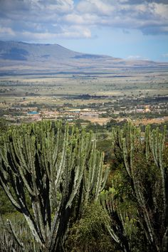 crazy cacti & the great rift valley