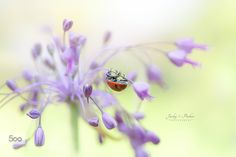 Lady in Lilac by JackyParker. Please Like http://fb.me/go4photos and Follow @go4fotos Thank You. :-)