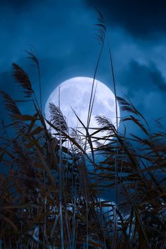Moonlight Photography, Moon Photography, Moon Pictures, Nature Pictures, Mystic Moon, Shoot The Moon, Night Aesthetic, Beautiful Moon, Moon Art