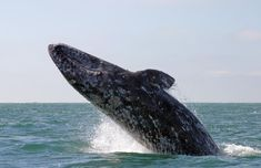 Whale watching is on my bucket list