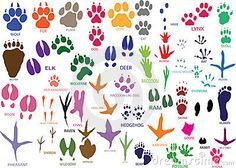 dierensporen poster - Google zoeken