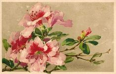 pink, fuschia / white rhododendrons Source by Iris Painting, Acrylic Painting Flowers, China Painting, Fabric Painting, Watercolor Flowers, Catherine Klein, Floral Illustrations, Botanical Illustration, Flower Images