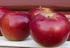 Arkansas Black Apple