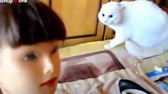 Приколы с котами /Fun with cats