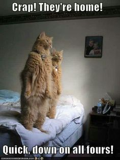 """""""No more kitties jumping on the bed."""