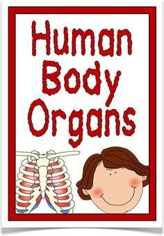 Human Body Organs - Treetop Displays - An elegant set of 18 A4 posters about human body organs. Includes: title poster, what is an organ?, eyes, ears, nose, tongue, brain, heart, lungs, liver, stomach, skeleton, muscles, bladder, kidneys, skin, pancreas and intestines. Visit our website for more information and for other printable classroom resources by clicking on the provided links. Designed by teachers for Early Years (EYFS), Key Stage 1 (KS1) and Key Stage 2 (KS2).