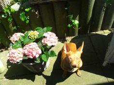 Binky loves the sun