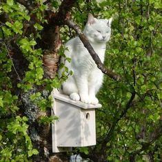 Pretty Cats, Beautiful Cats, I Love Cats, Crazy Cats, Animals And Pets, Cute Animals, Animal Gato, White Cats, Belle Photo