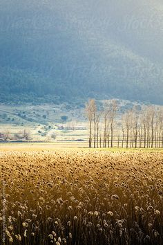 a sunny landscape with trees by Helen Sotiriadis
