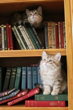 Cottage kittens and books!