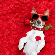 Happy Valentines Day to all our lovely customers contacts suppliers and followers  #spreadthelove #valentinesday #stafford #staffordshire