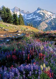 Mt. Rainier National Park.