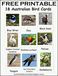 18 x Australian Bird Montessori Inspired Cards - free printables from Suzie's Home Education Ideas. Australia Continent, Teaching Kindergarten, Teaching Ideas, Preschool Schedule, Primary Science, Kids English, World Geography, Australian Animals, Hands On Learning
