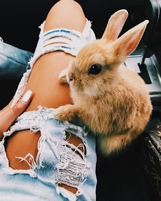 Cute little bunny Cute Little Animals, Cute Funny Animals, Cute Puppies, Cute Dogs, Animal Pictures, Cute Pictures, Baby Bunnies, Cute Creatures, Animals Beautiful