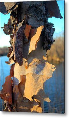 Birch Bark 2 Metal Print by Bonfire #Photography