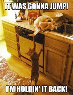 Helpful cat. LOL!