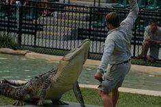 #airnzsunshine Australia Zoo