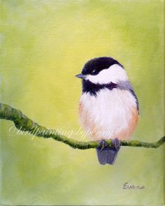 CHICKADEE painting 8 x 10 original bird by birdpaintingsbypenny, $125.00