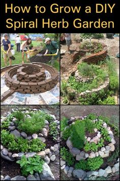What plants would you grow in your spiral garden?