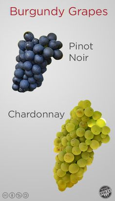 "Burgundy Wine Grapes Pinot Noir and Chardonnay  Pinot Noir & Chardonnay  To the 'vigneron"" (winemakers/growers) Burgundy is not only the original home of these grapes but the 'terroir' (tare-wah) that best expresses their character – elegant, aromatic, complex and highly enjoyable!"