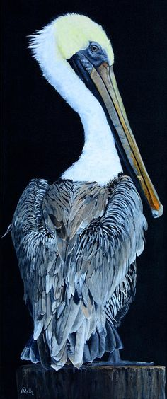 Pelican by Vicky Path, 2017, acrylic on canvas, genre: Realism #VickyPath
