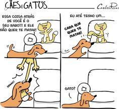 Cães e Gatos 4