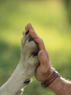 Country Strong.............  .Paw & Hand....