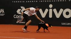 """Monday Cute: Four Shelter Dogs Were """"Ball Dogs"""" at the Brazil Open"""