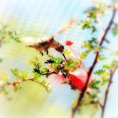 Physics Of the Hummingbird Bird in Flight Wings by elinay on Etsy, $14.88