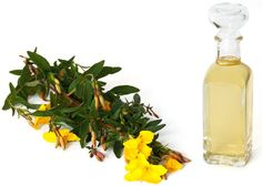 Exposed acne treatment can help clear up your spots. See more at Exposed acne treatment can help clear up your spots. See more at was last modified: February Healing Herbs, Natural Healing, Natural Oils, Natural Beauty, Primrose Oil, Evening Primrose, Primrose Plant, Prim Rose Oil Benefits, Herbal Remedies