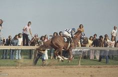 Preakness Stakes, Ron Turcotte in action aboard Secretariat at Pimlico Race Track, Baltimore, MD Barrel Racing Horses, Horse Racing, Most Beautiful Animals, Beautiful Horses, Pimlico Race Track, Preakness Stakes, Thoroughbred Horse, Clydesdale Horses, Breyer Horses