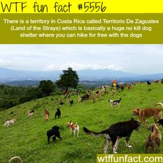 Costa Rica's Land of the Strays - WTF fun facts