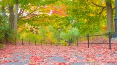 Colorful Fall Path by adenisej25.deviantart.com on @DeviantArt