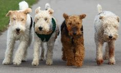 I love terriers