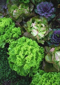 Grow a gorgeous edible garden anywhere: In dry soil, wet soil and shade.