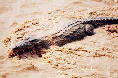 Saw my first crocodile in Turkana (Kepedo)