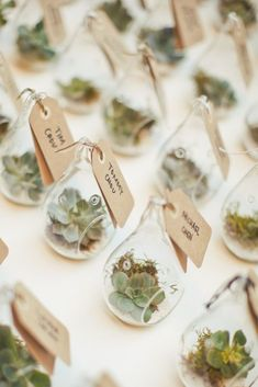 The Ultimate Succulent Wedding Guide - Favors - The Ultimate Succulent Wedding Guide - Favors - wedding decor diy Affordable Wedding Favours, Creative Wedding Favors, Wedding Gifts For Guests, Unique Wedding Favors, Wedding Party Favors, Bridal Shower Favors, Wedding Decorations, Trendy Wedding, Wedding Ideas