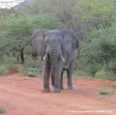 Sheldrick Wildlife (@DSWT)   Twitter Awesome, majestic, wise a gentle giant. Worth more alive.