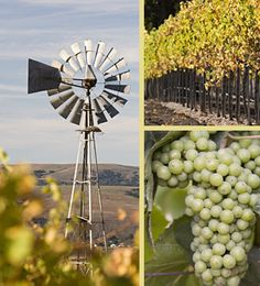 Santa Barbara County is a quiet sanctuary of golden hills and well-groomed vineyards located three hours north of the glitter and bustle of Los Angeles. This is the place we call home. For more than 20 years, we have produced estate grown Chardonnay, Pinot Noir and Syrah from our benchland vineyard in the Santa Maria Valley AVA of Santa Barbara County. Welcome to Cambria.