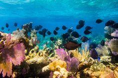 7 Favorite Caribbean Islands