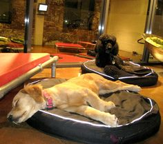 Dog Hotel | Rex Dog Hotel and Spa