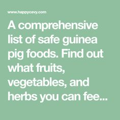 A comprehensive list of safe guinea pig foods. Find out what fruits, vegetables, and herbs you can feed your guinea pig. Vitamin C and Calcium info also included.