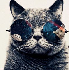 Most inspiring images and photos - Page I Love Cats, Cool Cats, Space Glasses, Glasses Wallpaper, Ei Nerd, C Is For Cat, Galaxy Cat, Lion Wallpaper, Space Cat