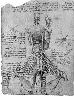 Étude vue de dos d'un squelette montrant les tendons après 1513 Crayon et encre sur papier bleu 27.4 x 20.4 cm Windsor, Royal Library