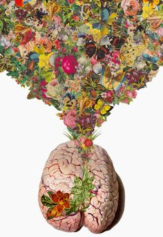 anatomical collage | travis bedel
