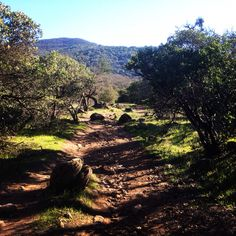 The road to Lake Ilsanjo in Annadel State Park